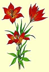 flower_saskatchewan